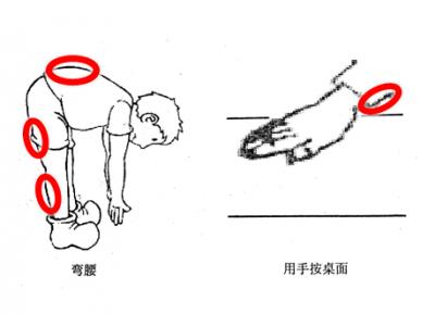 肌肉收缩的部分